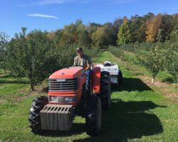 Dixon's Apple Orchard