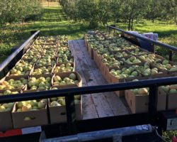 Dixon's Apple Orchard